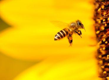 """PODCAST: """"Včely nechováme kvôli medu,"""" hovorí A. Gandžala"""